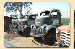 Our other 40's Chevy COE trucks